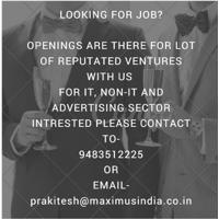 Maximus Human Resources Pvt. Ltd. Job Openings